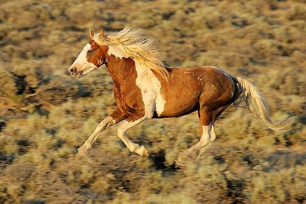 Colorado Nebraska Amp A Brief History Of The Wild Mustang