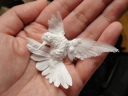 CH humming bird