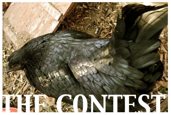 RCHTR contest