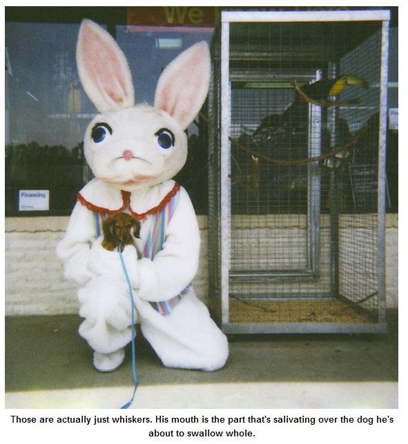 Bunny23