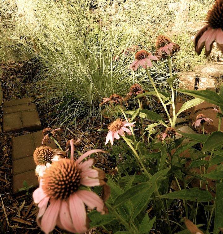 Mid-July garden.