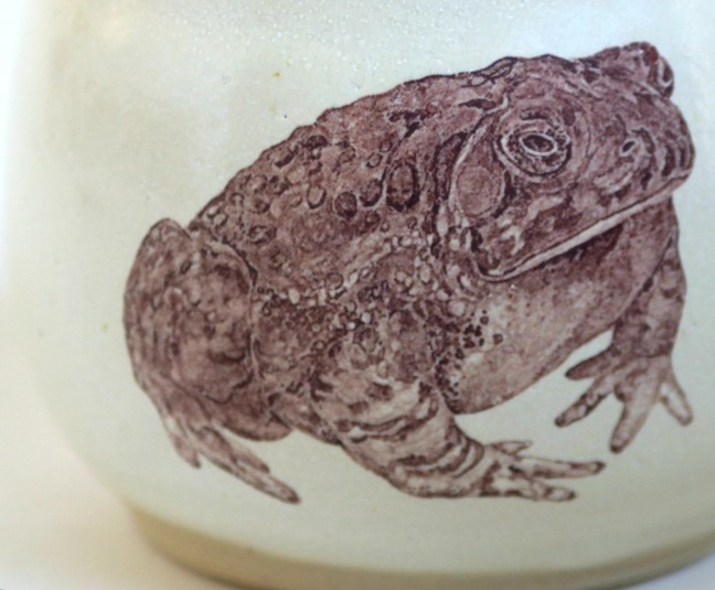 toad detail
