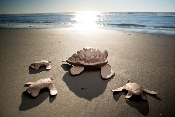 biodegradable turtle urn